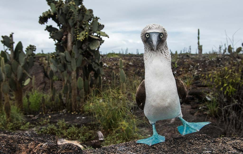 planning a trip to the amazon rainforest galapagos islands with
